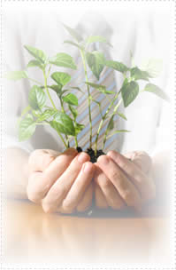 Image of a plant to illustrate business growth and nurturing